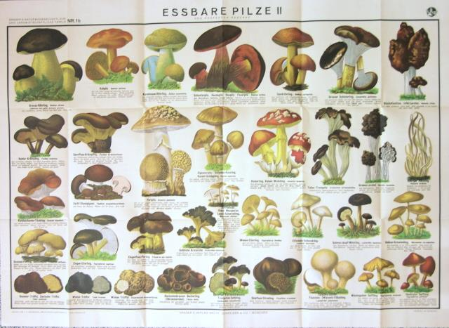 Librairie philippe lucas - Calendrier des champignons comestibles ...